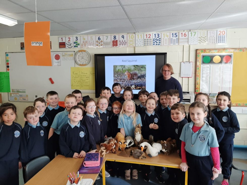 Native Irish mammals workshops